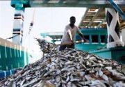 کشتی صیادی چینی حامل ۵۰ تُن ماهی میکتوفیده در جاسک متوقف شد