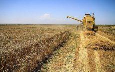 وزارت جهاد کشاورزی از تولید بذر حمایت میکند