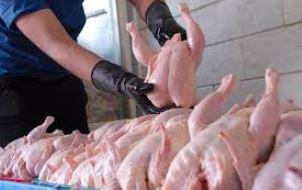 روزانه ۷۵۰۰ تن مرغ در کشور تولید می شود