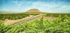 شرکت فولاد مبارکه سازمانی مسئولیتپذیر در زمینه مسائل زیستمحیطی