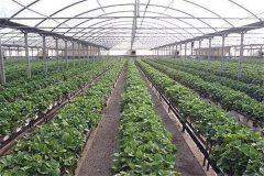 آمادگی وزارت صمت برای تمرکز بر فرآیند ثبت سفارش سموم کشاورزی