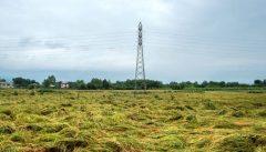 خسارت کمکاری و کرونا بر طرح تسطیح اراضی شالیزاری مازندران