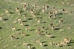 رشد ۱۳ درصدی مناطق حفاظت شده در دولت تدبیر و امید