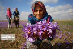 شبکهسازی صندوقهای روستایی وعشایری برای گسترش اشتغال پایدار