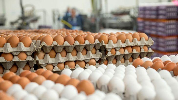 جلوی قاچاق تخم مرغ گرفته شود/خطر حذف تخم مرغ از سبد خانوار